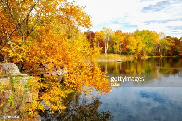 Fall Color Natural Beauty