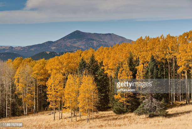 fall colored aspens on hart prairie - jeff goulden stock pictures, royalty-free photos & images