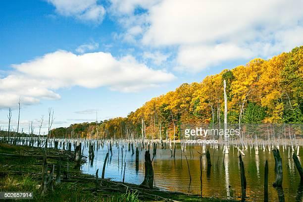 fall colorful landscape reflected in water - philipsburg sint maarten stockfoto's en -beelden