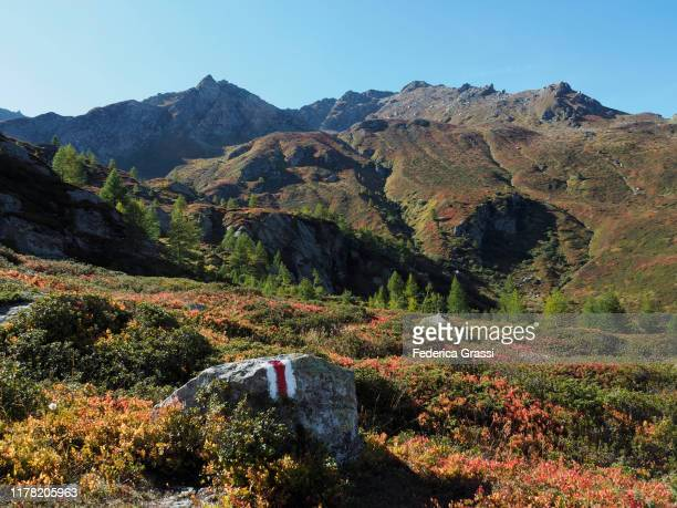 fall colors along hiking trail at simplon pass (passo del sempione) - トレイル表示 ストックフォトと画像