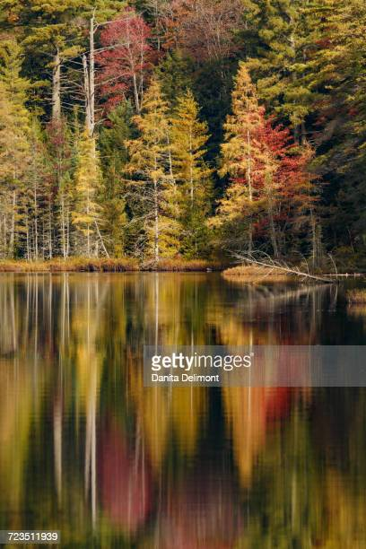 fall colors along shoreline of irwin lake, hiawatha national forest, upper peninsula of michigan, usa - hiawatha national forest stock pictures, royalty-free photos & images