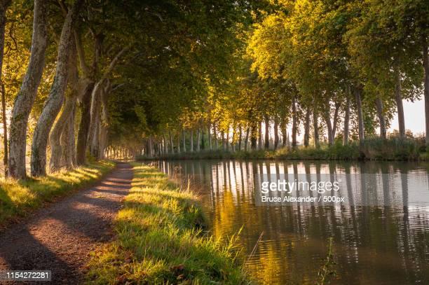 fall colors along the canal du midi - canal du midi photos et images de collection