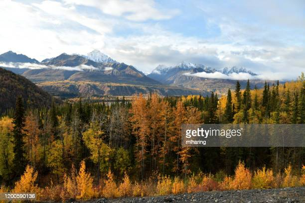 fall colors along the matanuska valley - chugach mountains stock pictures, royalty-free photos & images