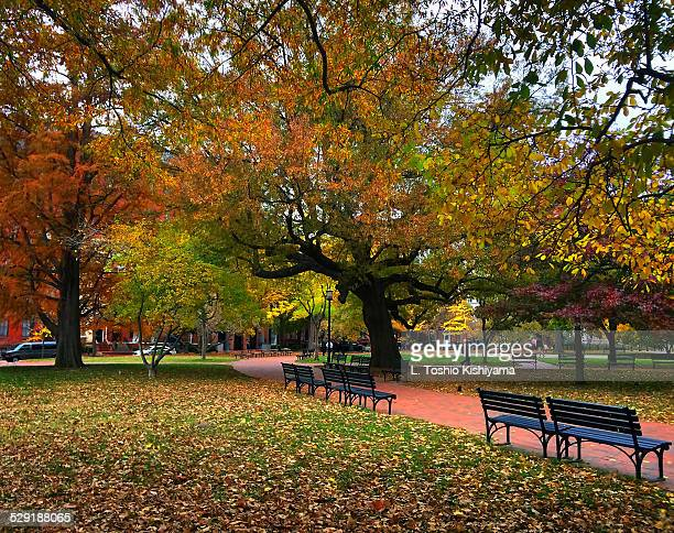 fall colors at lafayette park in washington, dc - lafayette square stock pictures, royalty-free photos & images