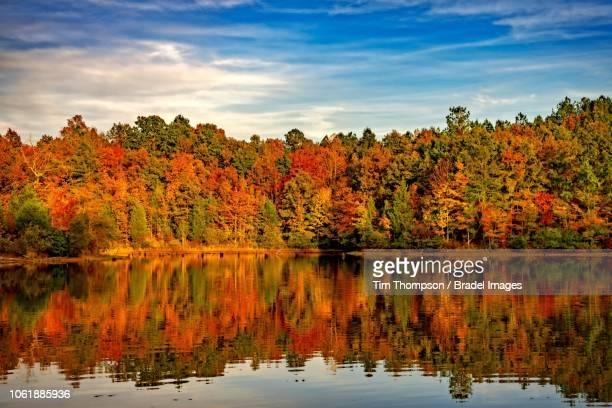 fall colors in alabama - アラバマ州 ストックフォトと画像