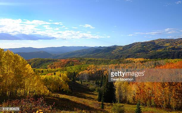 fall colors in colorado mountains - steamboat springs colorado - fotografias e filmes do acervo