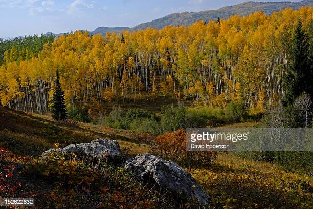 fall colors in colorado rocky mountains - steamboat springs colorado stock photos and pictures