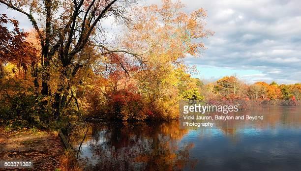 fall colors in oakdale, long island, ny - arboreto foto e immagini stock