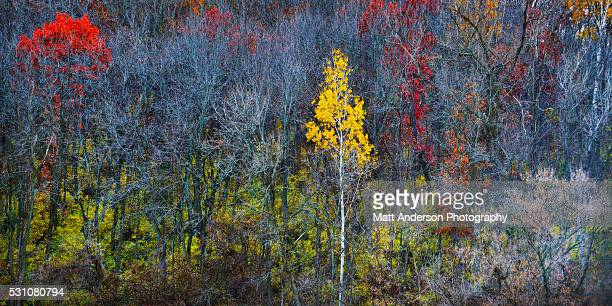 fall colors in rural wisconsin. - iowa_county,_wisconsin stock pictures, royalty-free photos & images