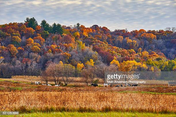 Fall colors in rural Wisconsin.
