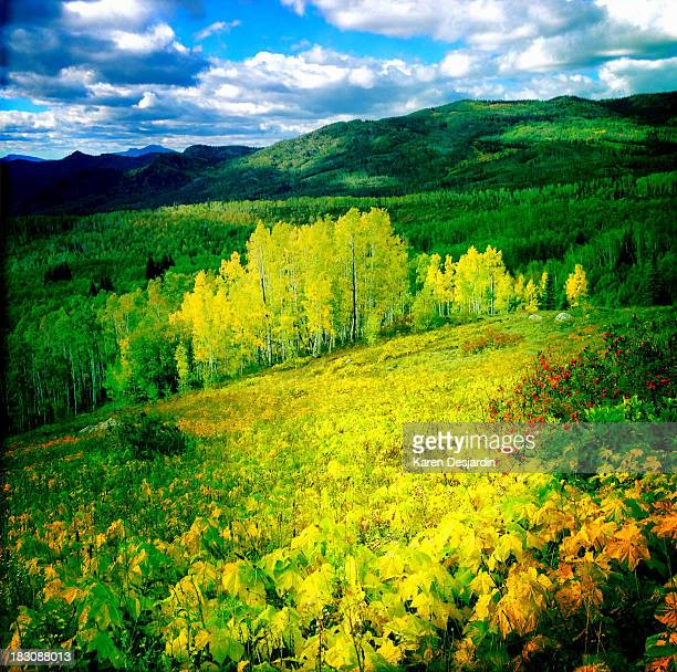 fall colors in the mountains, colorado - steamboat springs colorado stock photos and pictures