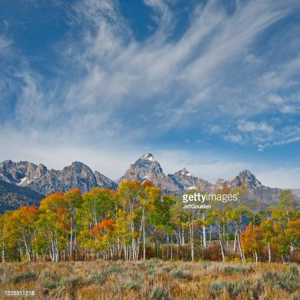 fall colors in the tetons - jeff goulden stock pictures, royalty-free photos & images