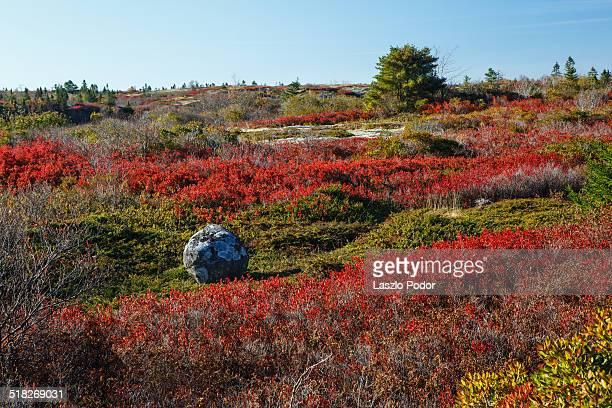 Fall colors near Blue Rocks