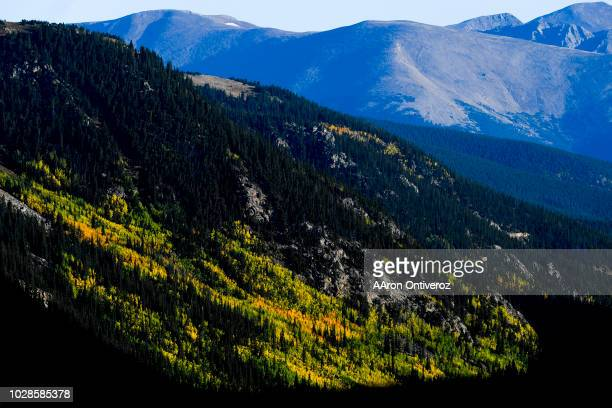 Fall colors near Guanella Pass on Friday, September 7, 2018.