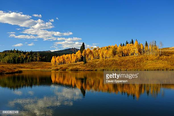 fall colors near steamboat springs - steamboat springs colorado stock photos and pictures