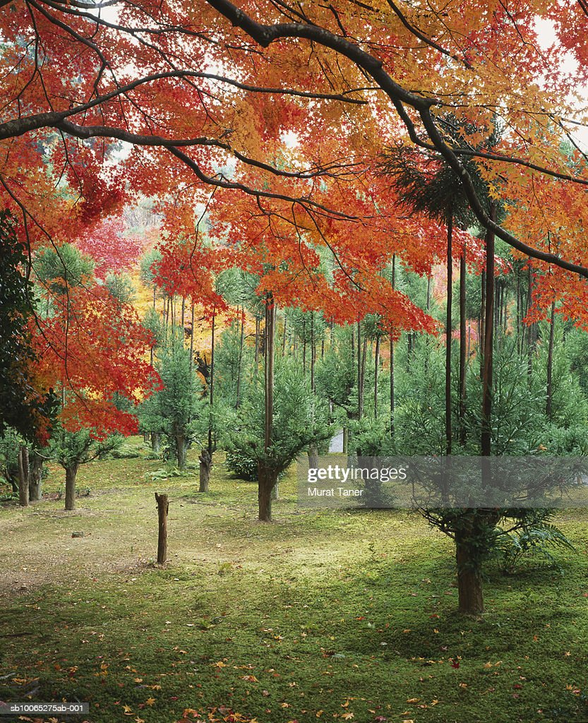 Fall colors on trees : Foto stock