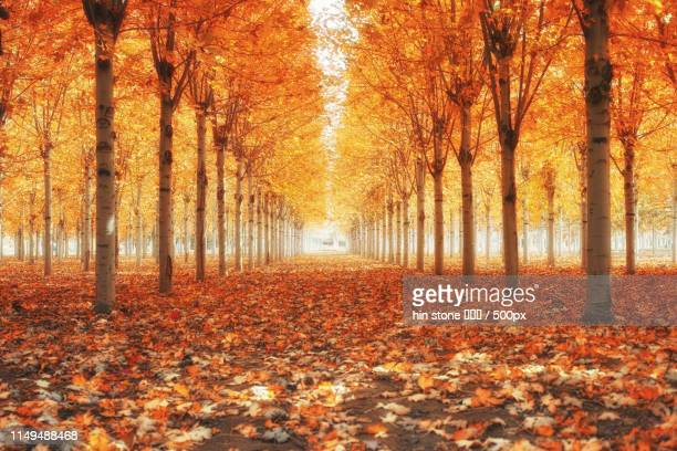 fall colors - halo symbol stock pictures, royalty-free photos & images