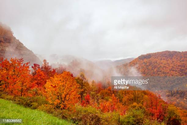 fall colors - october stock pictures, royalty-free photos & images