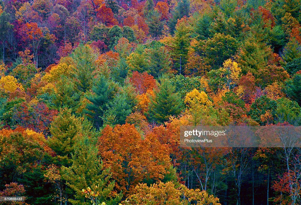 Fall colors : Stock Photo