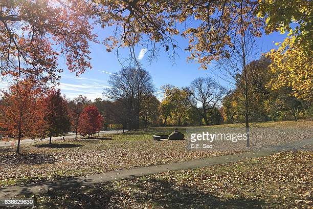 fall colors - westchester county stock pictures, royalty-free photos & images