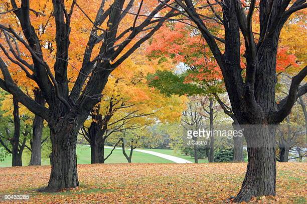 fall colors - milwaukee county  wisconsin stock pictures, royalty-free photos & images