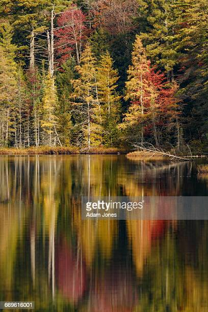 fall colors reflecting on irwin lake - hiawatha national forest stock pictures, royalty-free photos & images