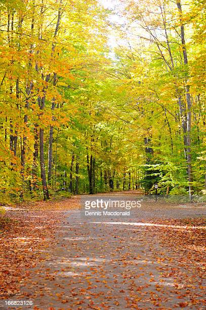 fall colosr in hiawatha national forest - upper peninsula stock pictures, royalty-free photos & images