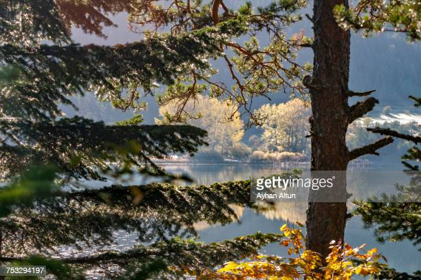 Fall colours at Lake Abant, Bolu, Turkey