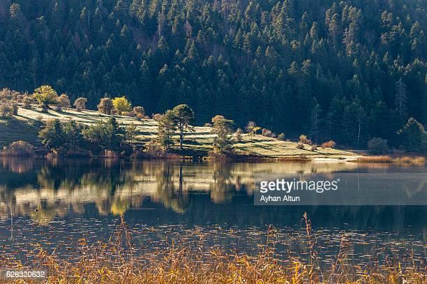 Fall colours at Lake Abant ,Bolu,Turkey