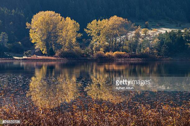 Fall colours at Lake Abant,Bolu,Turkey