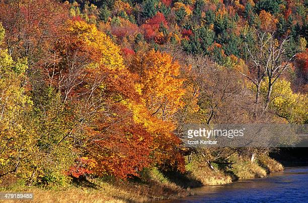 Fall colours in full bloom in Vermont