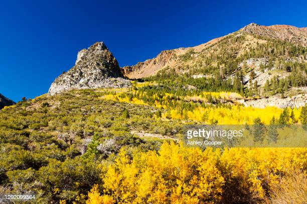 fall colours in near lee vining on the way into yosemite national park, california, usa. - ashley aspen stock pictures, royalty-free photos & images