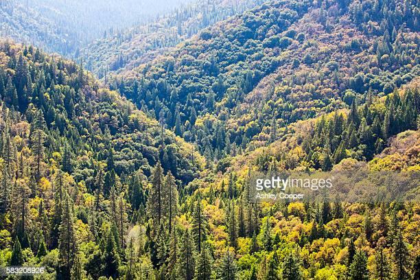 fall colours near springville, tule river, california, usa. - springville california stock pictures, royalty-free photos & images