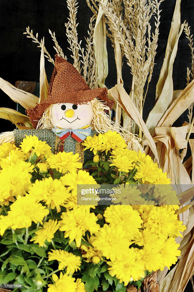Fall Decoration With Dried Corn Stalks Mum And Burlap Scarecrow