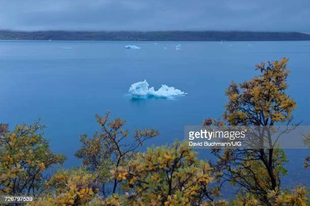 Fall foliage and iceberg