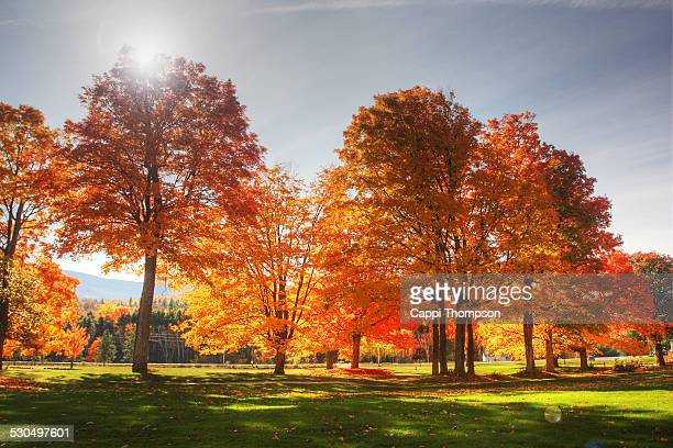 fall foliage flare - cappi thompson stock pictures, royalty-free photos & images