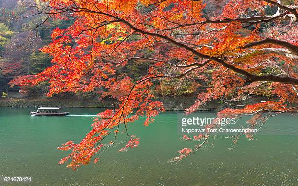 Fall foliage in Arashiyama, Kyoto