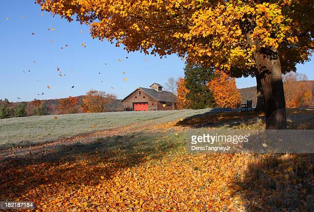 fall foliage in connecticut - connecticut stock pictures, royalty-free photos & images