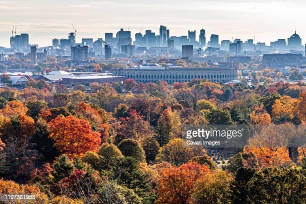 fall foliage leading to the boston city skyline. - boston massachusetts stock pictures, royalty-free photos & images