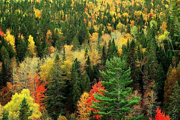 Fall foliage of the Acadian Forest, New Brunswick