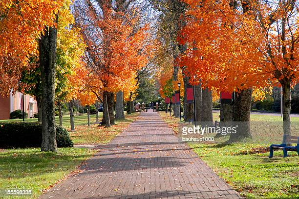 Fall Foliage on College Campus