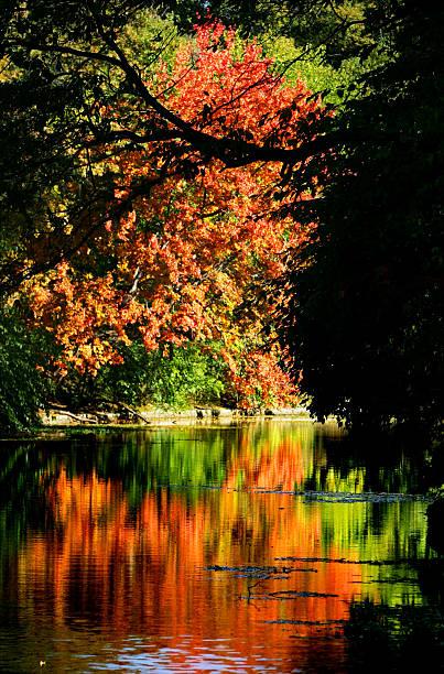 Fall foliage reaches its peak in Brooklyn's Prospect Park.
