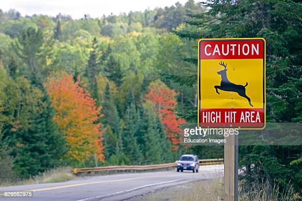 Fall foliage Route 16 deer crossing Franklin County Maine New England USA