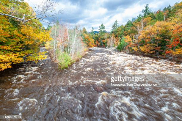 fall foliage scene along swift river, kancamgus highway, new hampshire, new england, usa - swift river stock photos and pictures