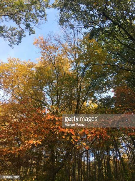 Fall foliage tree tops in the morning