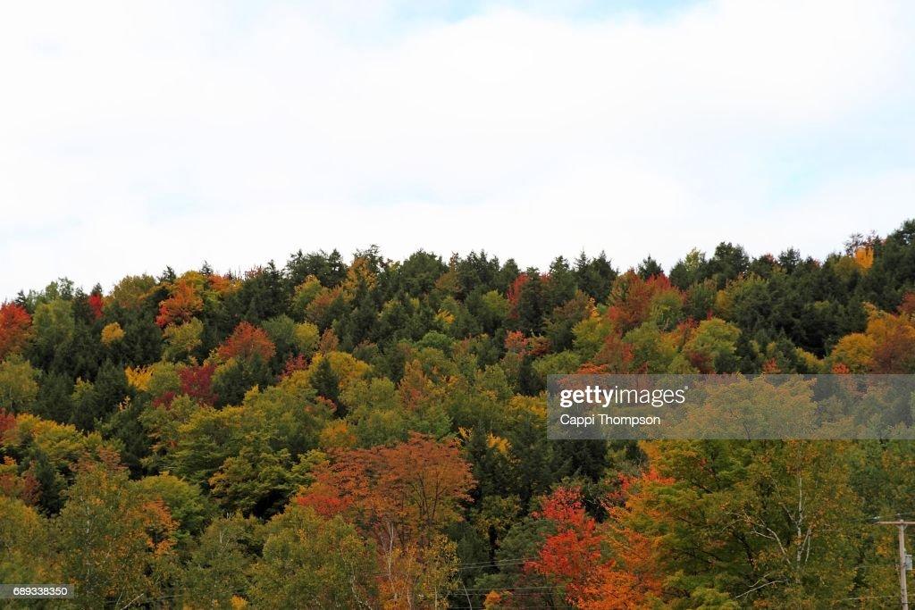 Fall foliage tree tops : Stock Photo
