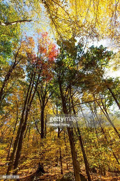Fall foliage trees