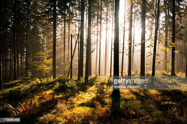 fall forest with sunrays - saxony stock pictures, royalty-free photos & images