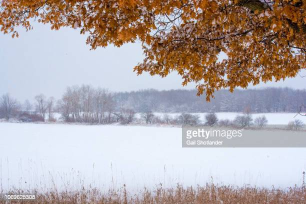 fall framing winter - barrie stock pictures, royalty-free photos & images