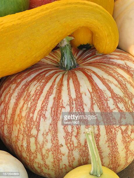 Fall Gourds Close Up